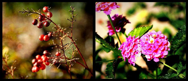 Closeup collage
